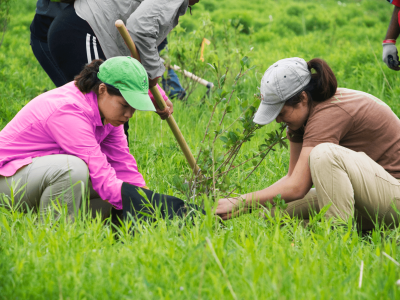 Youth working together to plant a tree.