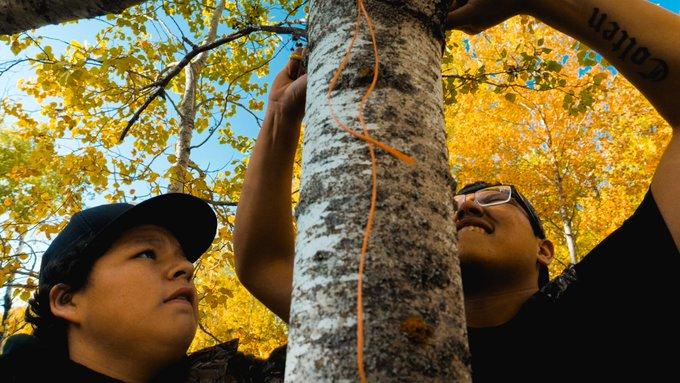 Deux individus attachant une corde autour d'un arbre